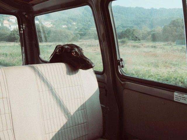 dog-in-car-windows-closed-1024x768